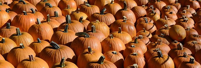 family friendly activities for halloween - Halloween Events In Va